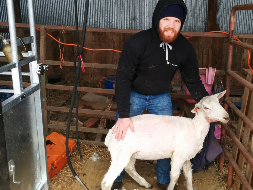 Chitwood Family Farm - Sheep Shearing